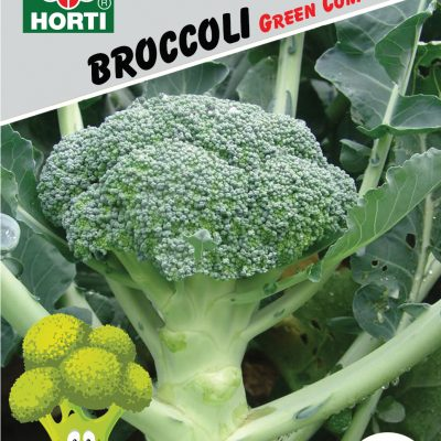 Premium Selection Seeds | Horti Flora - Singapore Seeds Supplier